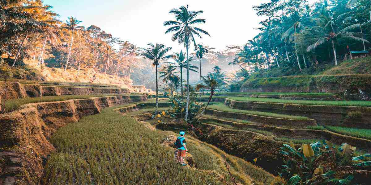 Ubud retreat and one of the most exotic travel destinations in the world