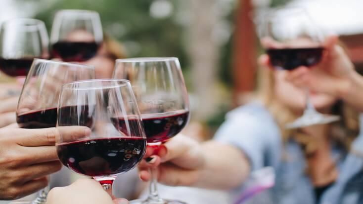 wine tasting during harvest season