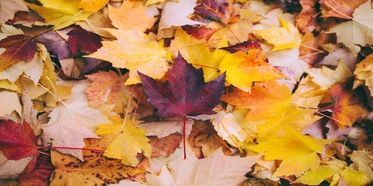 stunning fall foliage leaves and autumn colors