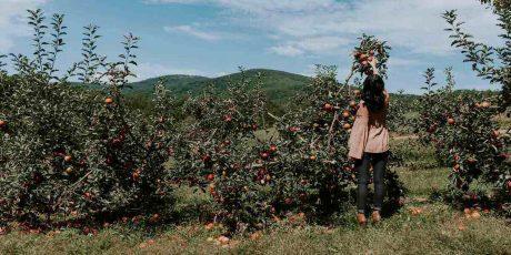 Apple Picking in Upstate New York 2021