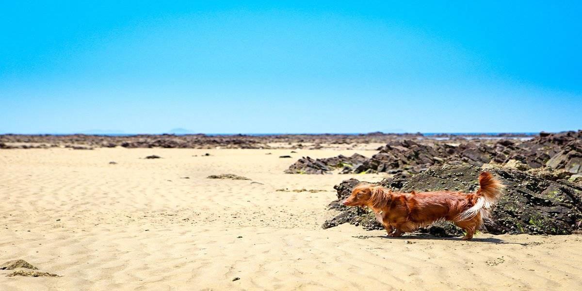 pet-friendly getaways for summer beaches