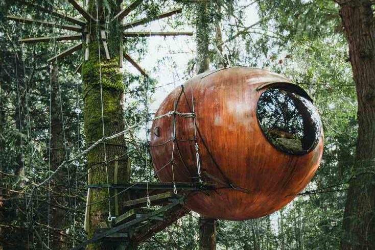 Cool tree house rental