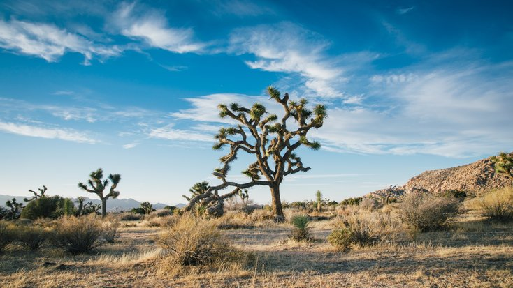 4 Alternatives to Joshua Tree Hotels: Best Kept Secrets of Joshua Tree NP