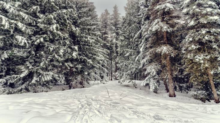Winter track through snowy trees to homes for rent in Lake Arrowhead CA