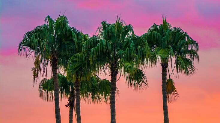 Palm trees on red sky: Summer vacations 2021