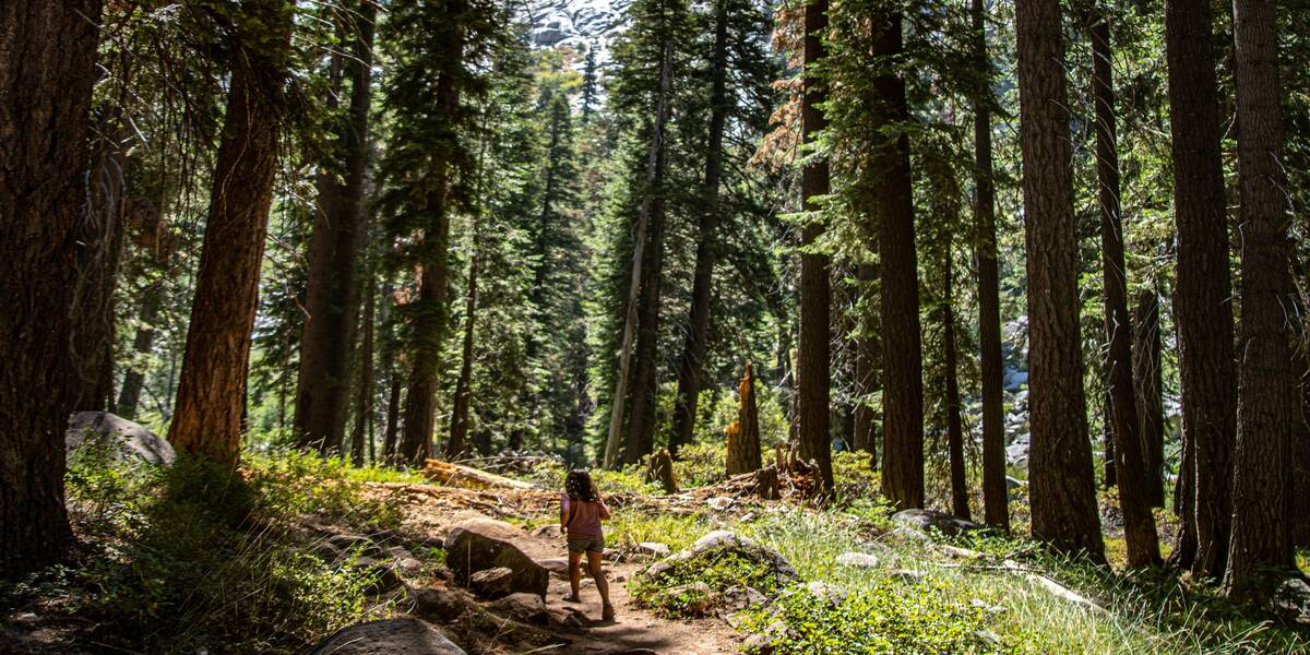 Beautiful vista of California Redwoods vacations 2021