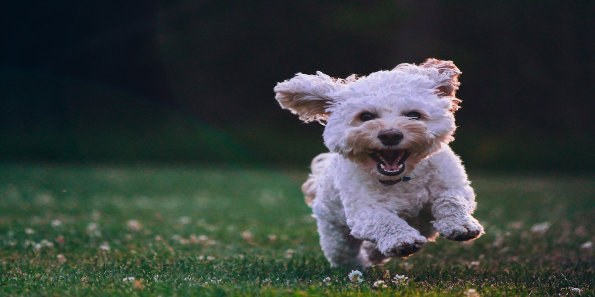 discover what to buy your dog this summer 2020 for pet friendly vacations