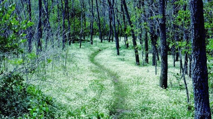 Forest walk through Appalachian Trail