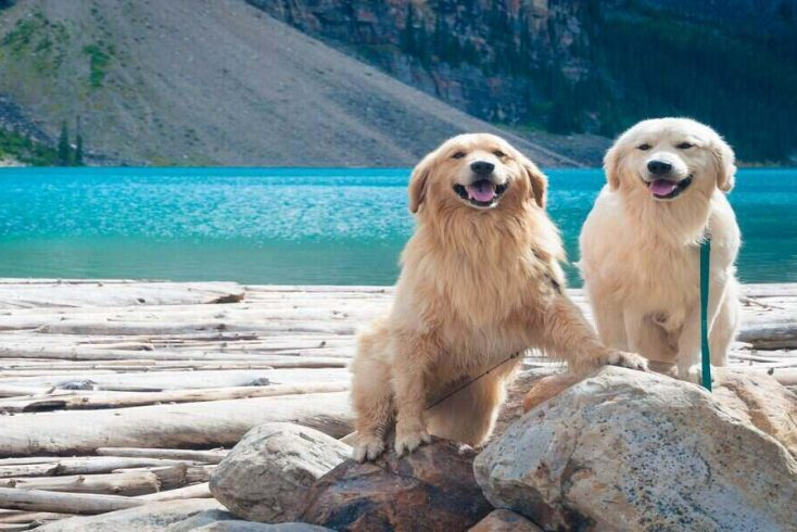 two dogs enjoying lake camping trips