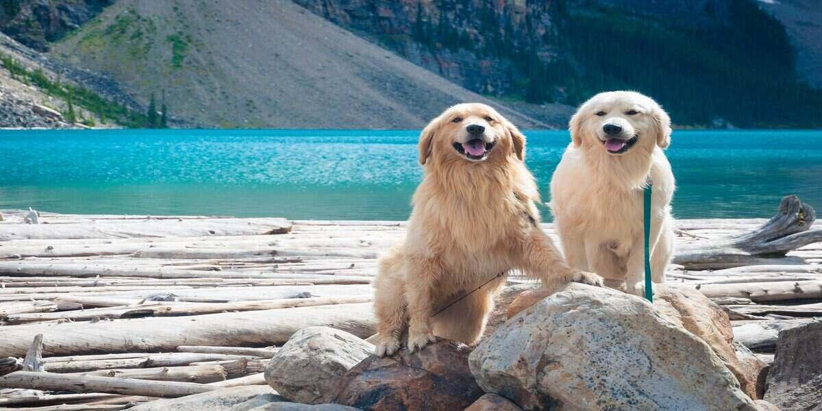 two dogs enjoying lake camping trips