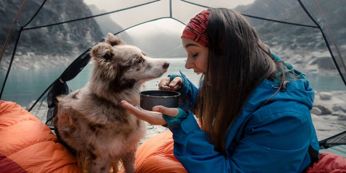 A dog in a tent camping with its owner