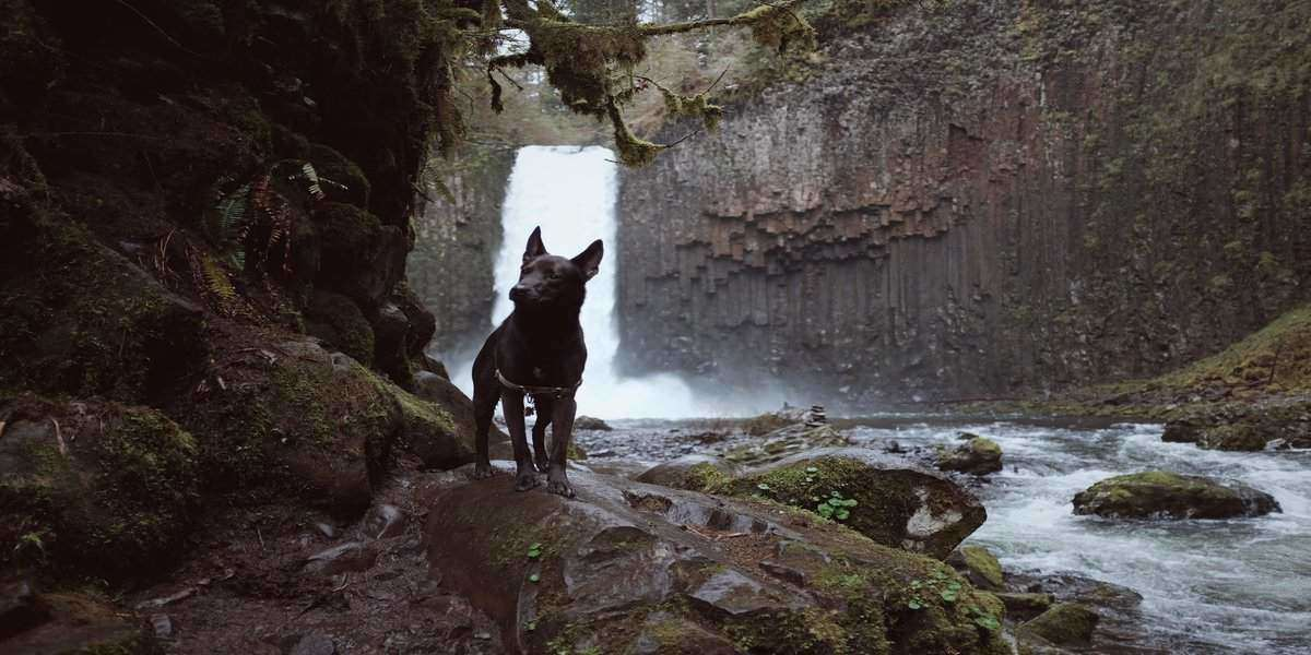 Image of fido on one of dog friendly trails in Banff, Canada 2020
