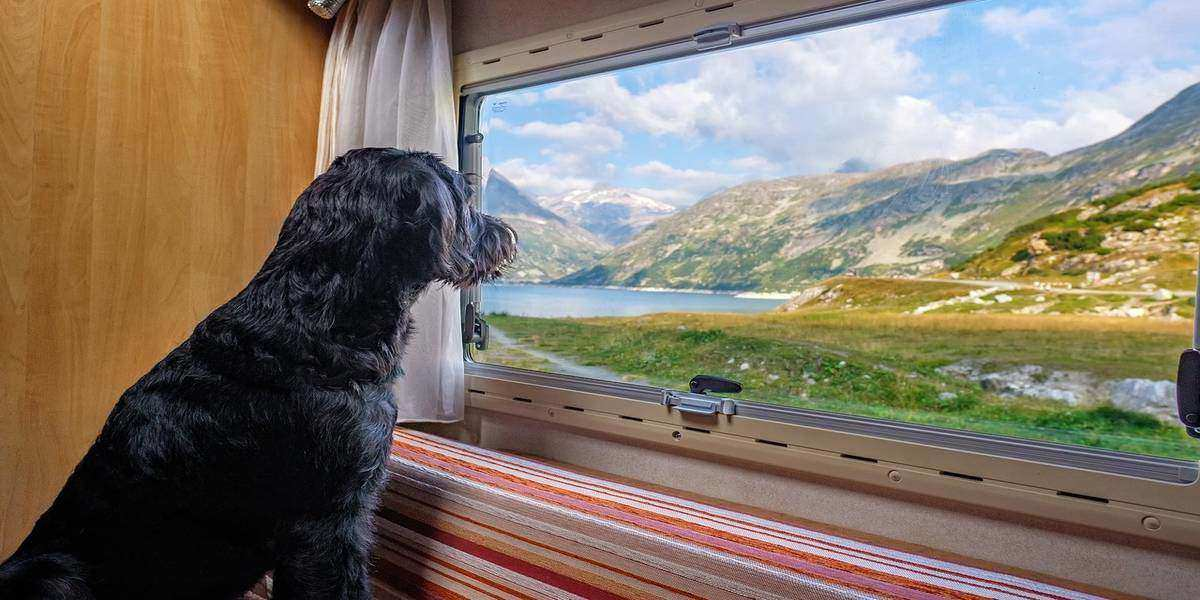 Pet-proofing your vacation rental