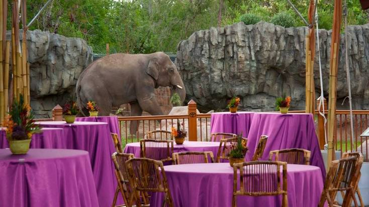 Get married at Denver Zoo in 2020