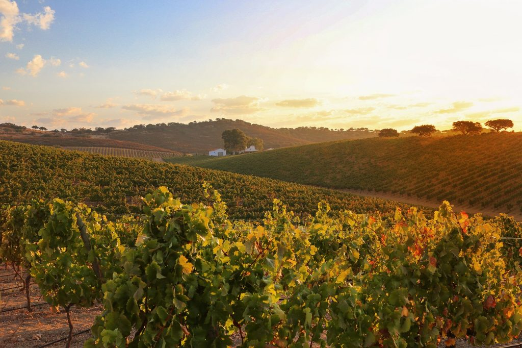 Alentejo has a long history of viticulture