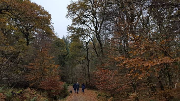 Enjoy autumnal walks through the stunning Ae Forest.
