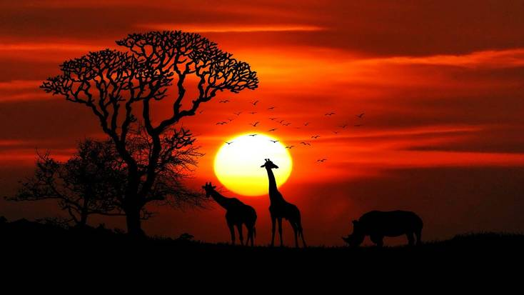 Explore the best places to visit in Africa