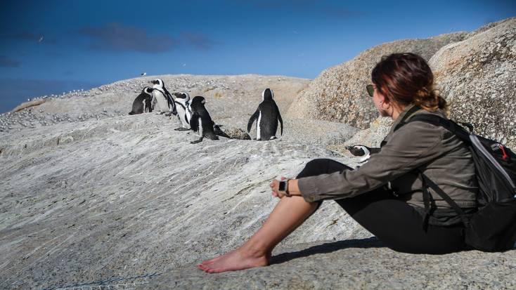 Penguins at Boulder Beach near Simon's Town