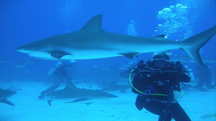 Scuba diving, Bahamas vacation activities