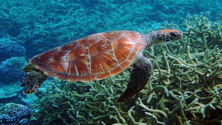 Go turtle swimming on your winter getaway