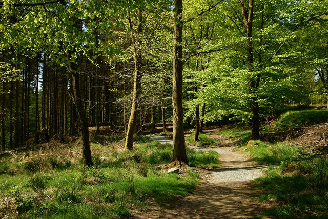 Enjoy forest holidays in the lake district when you visit Grizedale Forest