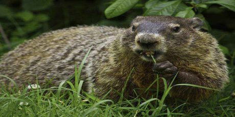 Celebrate Groundhog Day 2020 in the Pocono Mountains