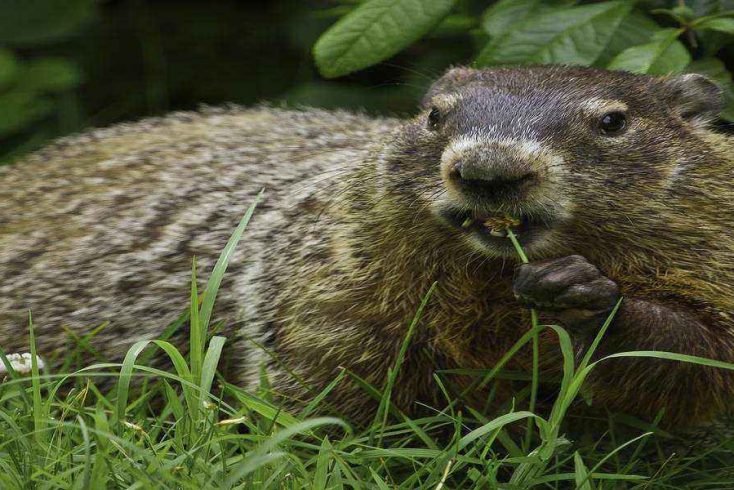 Celebrate Groundhog Day in the Pocono Mountains