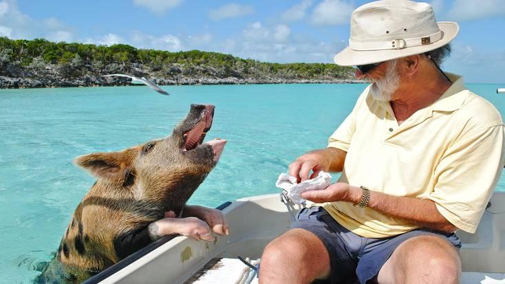 Meet the residents of Pig Beach!
