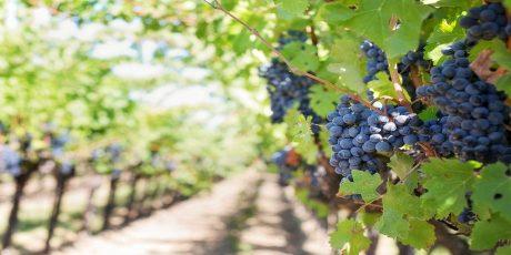 Best Portuguese Wine Regions
