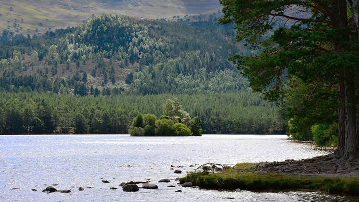 Enjoy the Cairngorms when you visit Rothiemurchus Forest