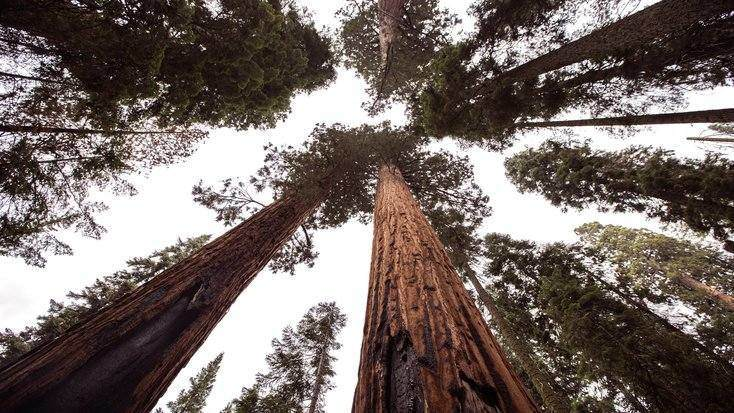 View of one of the natural wonders of the US, Redwood Forest National Park