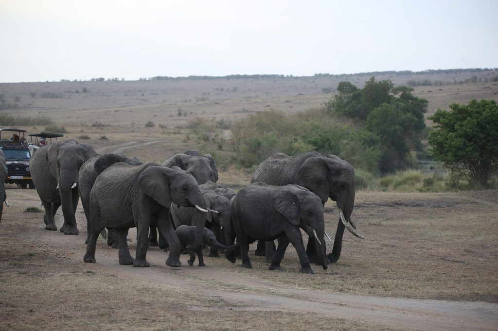 An incredible safari experience is among the things to do in Kenya