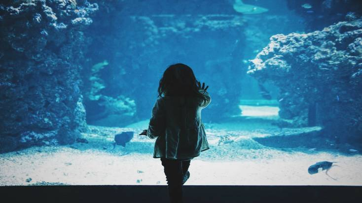 A child intrigued at an aquarium