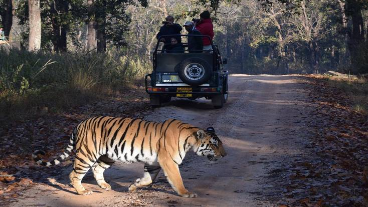 See the Indian tiger in its natural habitat