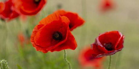 Anzac Day Commemoration, 2021