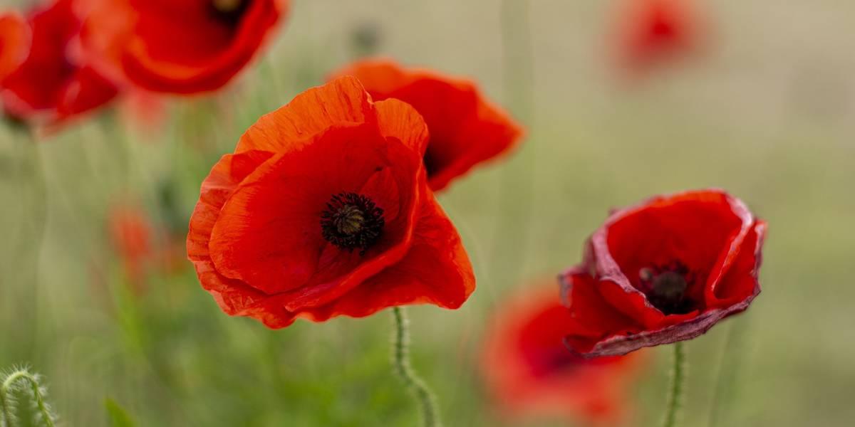 Commemorate ANZAC Day