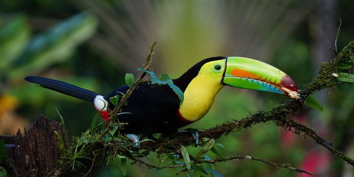 Discover Costa Rica wildlife
