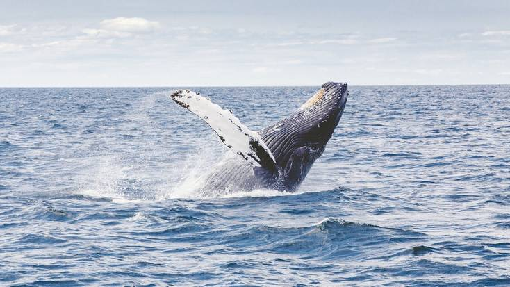 Whale watching in Costa Rica: wildlife in the waves