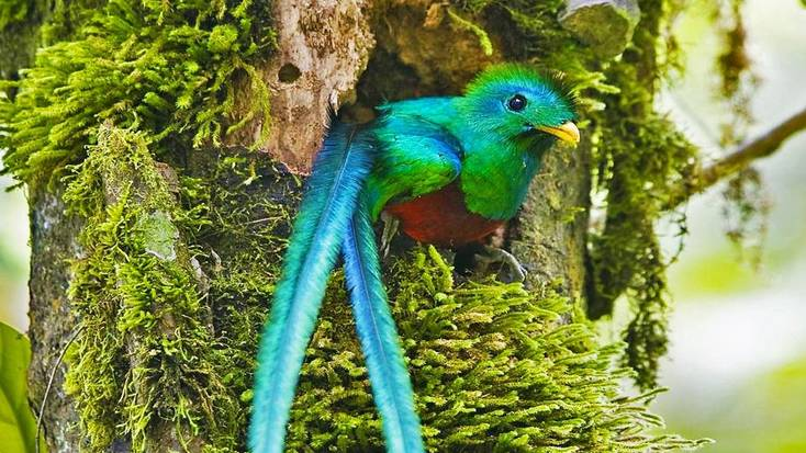 Catch sight of a quetzal, and elusive tropical bird