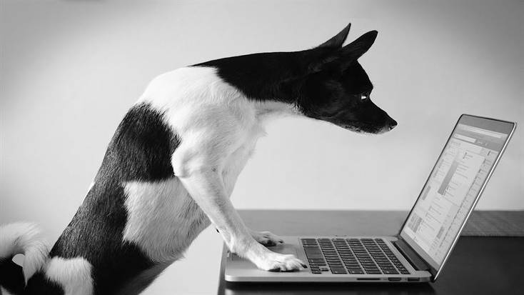 Don't forget to SKype the family dog