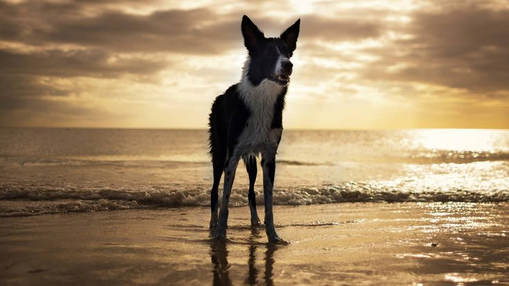 A dog on Fort Myers Beach