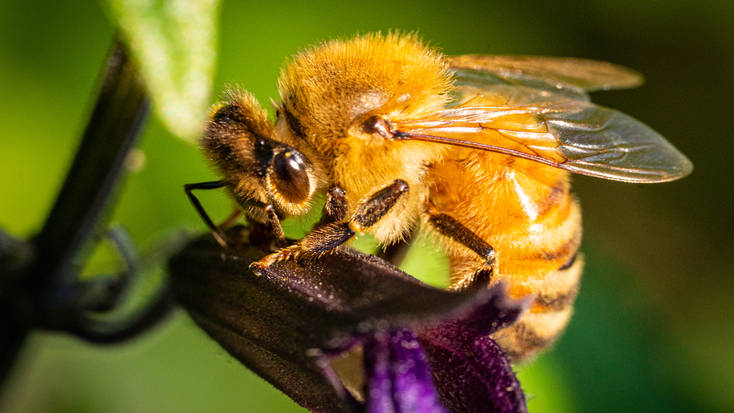 A photo of a bee by Travis Burke Photography