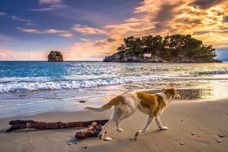 The best dog-friendly beaches for summer 2020