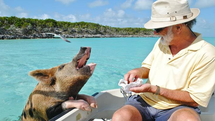Visit Pig Beach on you vacations in the Bahamas
