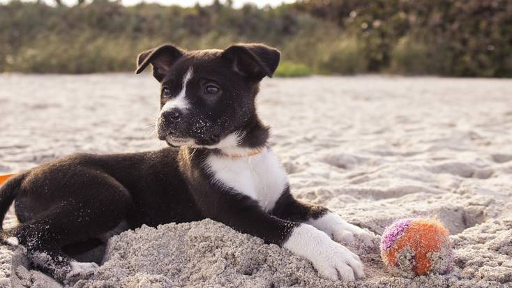 Dog-friendly beaches for some puppy vacations