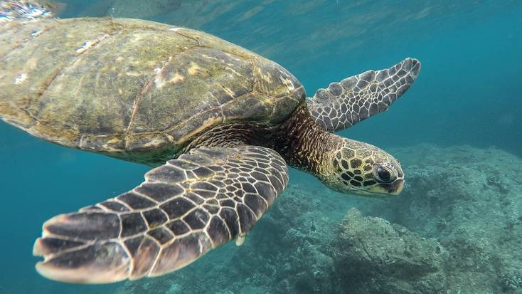 See the sea turtles in Akumal