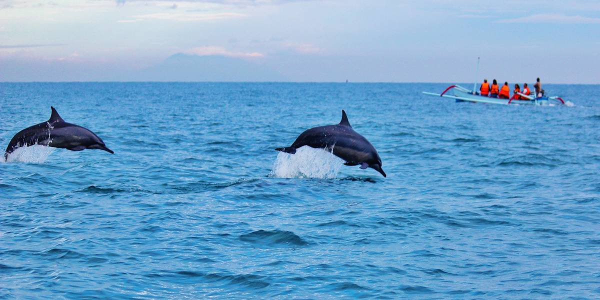 Best places to go on a dolphin cruise and dolphin watching