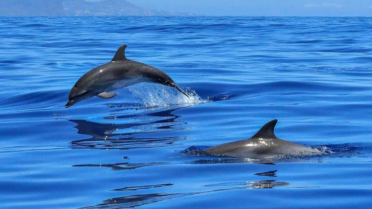 Plan a dolphin watching trip