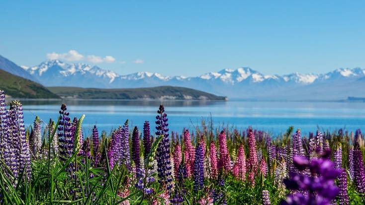 Spend your holidays in New Zealand at Lake Tekapo