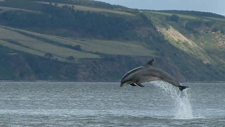 Dolphin in Moray Firth, Scotland